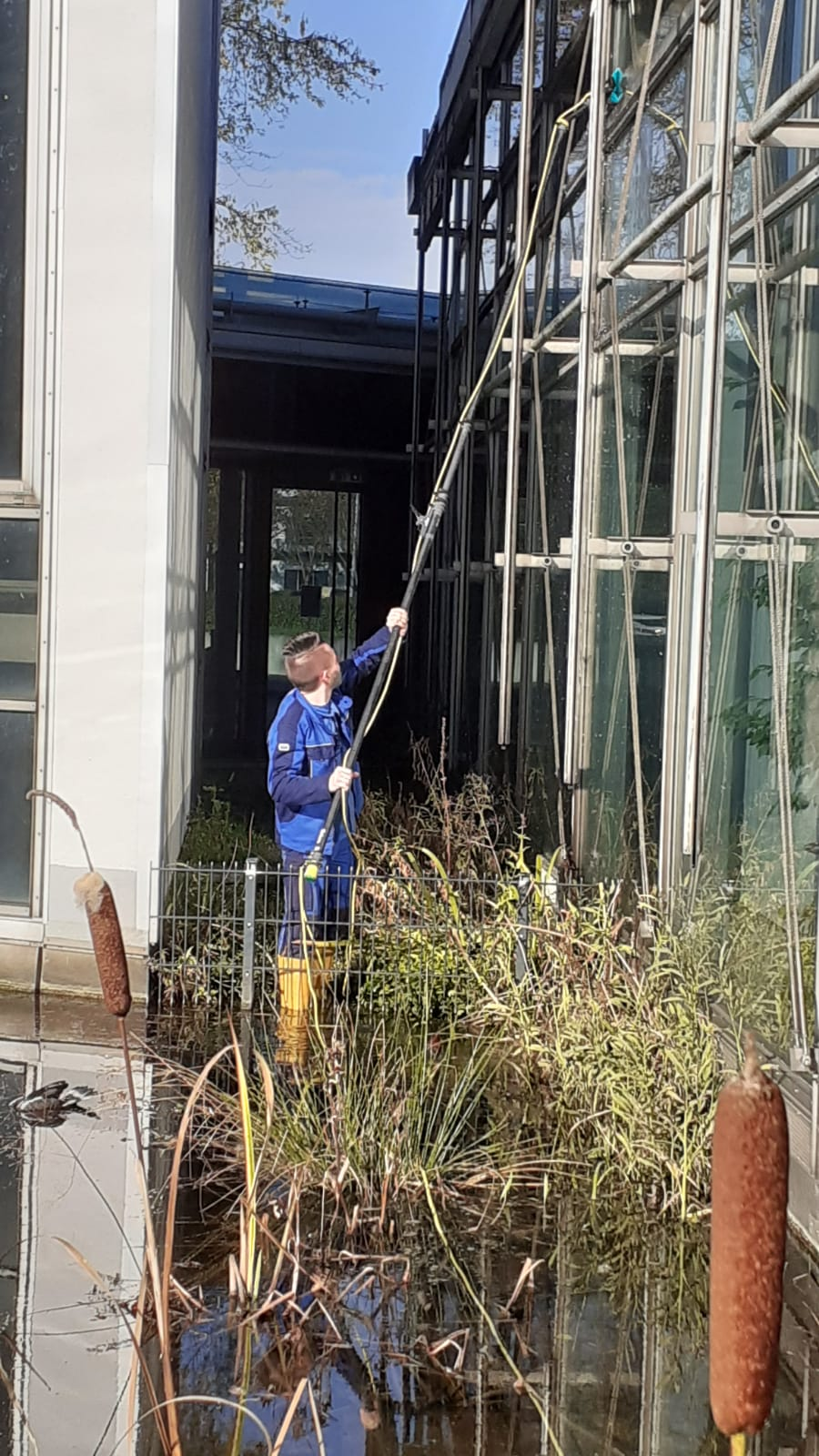 Fensterreinigung ohne Chemie